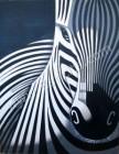 BN-11 Lukisan Zebra