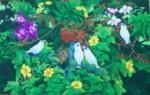 BR-17 Lukisan Burung Jalak Bali